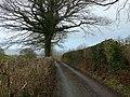Lon gul ger Cwm Isaf - Narrow lane near Cwm Isaf. - geograph.org.uk - 1087229.jpg