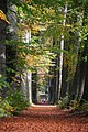 Look how tiny the people are inmidst of these giant Beech trees at Mariendaal Schaarsbergen-Oosterbeek - panoramio.jpg