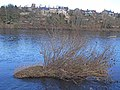 Looking across the Tyne to Corbridge - geograph.org.uk - 1700295.jpg
