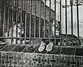 Los leones del parque.jpg