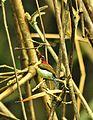 Lovely sunbird.jpg