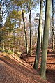 Lovely walking in the wood of Hoge erf with seeping water valley in autumncolours - panoramio.jpg