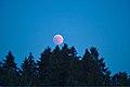 Lunar Eclipse 2018 SG 013 (29823675368).jpg