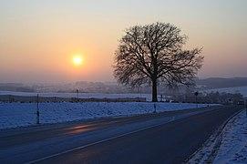 Lutherbuche im Winter...IMG 7838WI.jpg