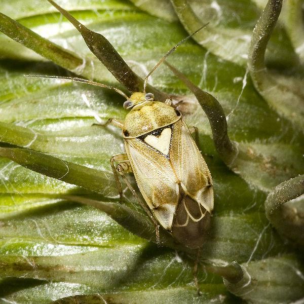 stechende insekten deutschland bilder