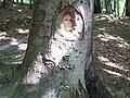 Mária 2 - panoramio.jpg