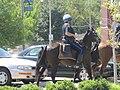 MPD Memphis TN 2010-09-18 horseback Cooper-Young-Festival 01.jpg