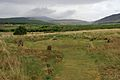Machrie Moor stone circle 45.jpg