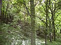 Madara - panoramio - Plamena Vlaeva (6).jpg