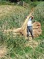 Making the reed bales - geograph.org.uk - 223676.jpg