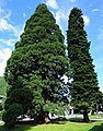Mammutbaum Treffen am Ossiachersee, Villach Land, Kärnten.jpg