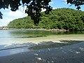 Mandahl Bay Salt Pond, St Thomas.jpg