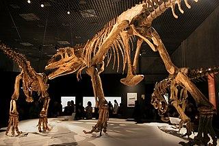 <i>Mapusaurus</i> Cacharodontosaurid dinosaur genus from the Late Cretaceous period