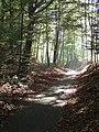 Marselisborgskovene (cykelsti).jpg