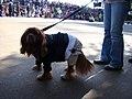 Mclovin dog (2956789391).jpg