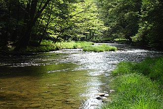 Allegheny National Forest - Mead Run in the Allegheny National Forest