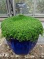 Medicinal Plants - US Botanic Gardens 26.jpg