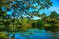 Miami - Fairchild Tropical Botanic Garden - (12259898863).jpg