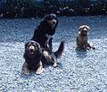 Mid Canterbury Dogs.JPG