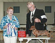 Average size of male dachshund