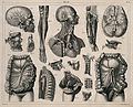 Miscellaneous anatomy; seventeen figures, including dissecti Wellcome V0008470.jpg