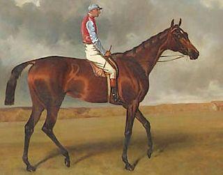 Miss Jummy British-bred Thoroughbred racehorse