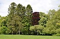 Monceau-sur-Sambre - parc - 2019-05-12 - 15.jpg