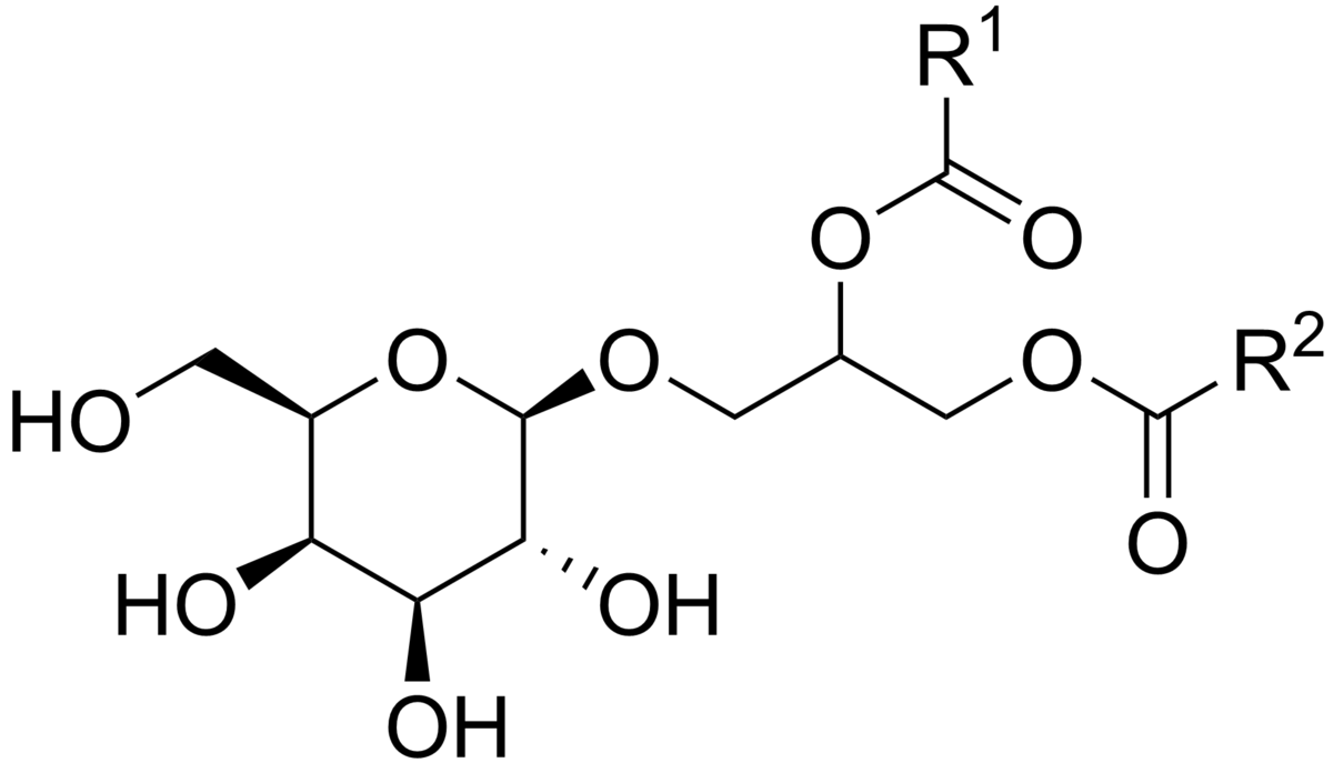 Galactolipid - Wikipedia