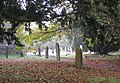 Morning mist, St Mary's churchyard - geograph.org.uk - 1541573.jpg