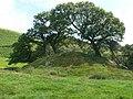 Motte at Bronfelin, near Newtown - geograph.org.uk - 1384825.jpg