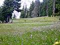 Mount Hood timberline alpine meadow in bloom P1709.jpeg