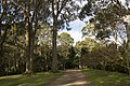 Mount Wilson NSW 2786, Australia - panoramio (67).jpg