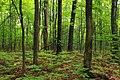 Mountaintop Forest (3) (9525655133).jpg
