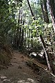 Muir Woods National Monument 2010 14.JPG