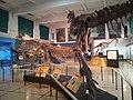 Museo de ciencias naturales - panoramio (5).jpg