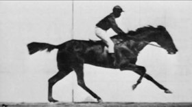 Fájl:Muybridge race horse.webm