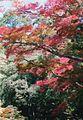 MyPhotoMino0126.JPG