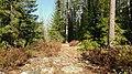 My Stone Path... - panoramio.jpg