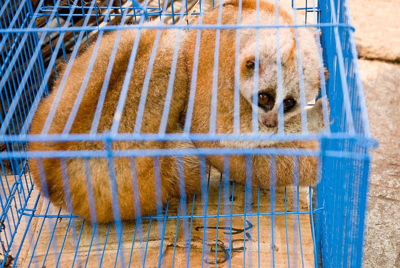 Myanmar Illicit Endangered Wildlife Market 06.jpg