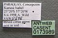 Mycocepurus smithii casent0173989 label 1.jpg