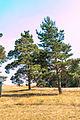 Národní přírodní památka Kleneč 14.jpg