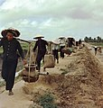 NARA 111-CCV-221-CC33513 Vietnamese farmers working in fields guarded by ROK Marines 1966.jpg
