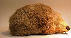 Structural coloration - In 1892, Frank Evers Beddard noted that  Chrysospalax golden moles' thick fur was structurally coloured.