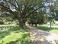 NOLA Chalmette Cemetery Trees.jpg