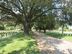 Chalmette National Cemetery - Image: NOLA Chalmette Cemetery Trees