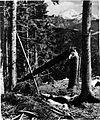 Na parobku slovenskega visokogorskega gozda pod Košuto (v ozadju Storžič) 1930.jpg