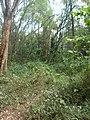 Nairobi Arboretum Park 41.JPG