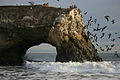 Natural Bridges State Beach Take flight.jpg