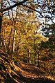 Natural monument Vinice acidophilous oak forest 03.jpg
