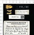 Naturalis Biodiversity Center - ZMA.MAM.11166.a pal - Mops condylurus - skull.jpeg